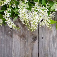 Free Bird Cherry Branch On A Wooden Surface Stock Photos - 19527593