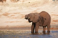 Free Large African Elephant Royalty Free Stock Photos - 19527738