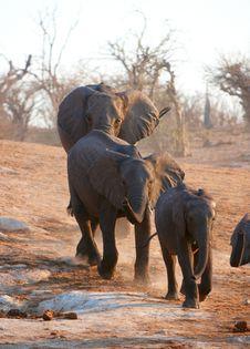 Free Large African Elephant Bull Stock Image - 19527751