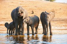 Large Herd Of African Elephants Royalty Free Stock Photos
