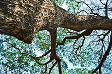 Free Branch Stock Photo - 19528320
