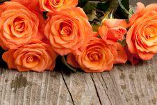 Free Orange Roses Stock Image - 19528421