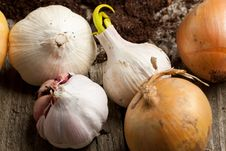 Free Garlics And Onions Royalty Free Stock Images - 19528489