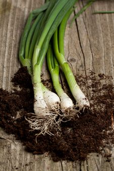 Free Bunch Of Fresh Green Onions Royalty Free Stock Image - 19528496