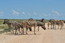 Free Zebras On The Road Stock Photos - 19529223
