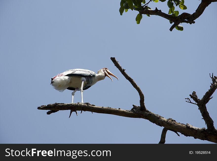 Migratory Bird - 2