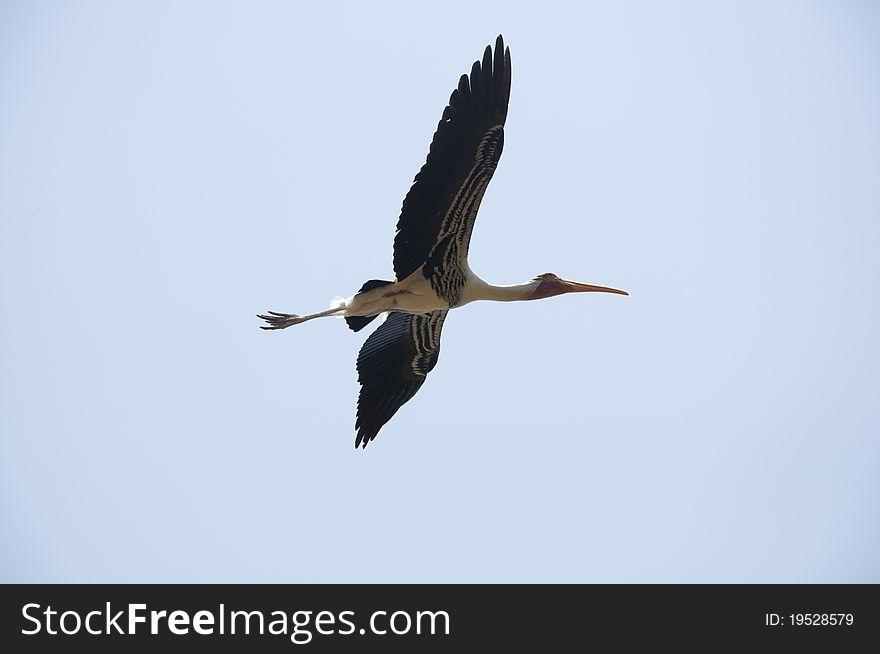 Migratory Bird - 5