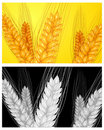 Free Ear Wheat Background Royalty Free Stock Images - 19536669