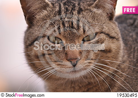 Cat domestic Stock Photo
