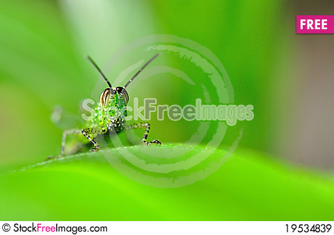 Green grasshopper on blade of grass Stock Photo