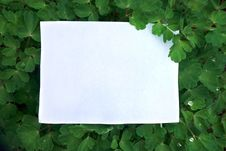 Free A Sheet Of Paper On Green Leaves Background Royalty Free Stock Photo - 19530415