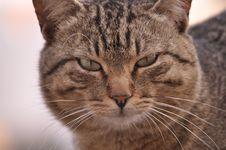 Free Cat Domestic Royalty Free Stock Photo - 19530495