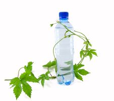 Bottle Of Water With A Sprig Of Flowers Stock Image