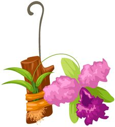 Free Orchid Stock Images - 19532094