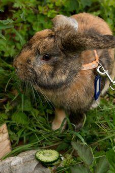 A Rabbit Stock Photos