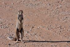 Free Ground Squirrel Stock Photos - 19533803