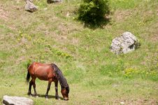 Free Brown Horse Grazing Royalty Free Stock Images - 19534799