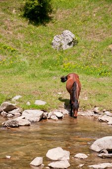 Free Brown Horse In Natural Environment Stock Photography - 19534822