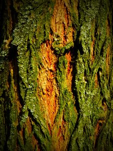 Free Orange-green Tree Crust Stock Photography - 19535072