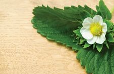 Free Flower And Green Leaves Stock Image - 19537301