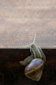 Free Snail Stock Photography - 19537682