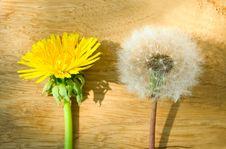 Free Dandelion Flower Stock Photos - 19537683