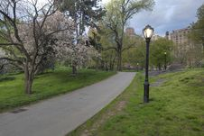 Free Spring In Central Park Royalty Free Stock Photography - 19537727