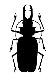 Free Black Horned Beetle Royalty Free Stock Images - 19537969