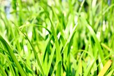 Leaves Grass Green Royalty Free Stock Images