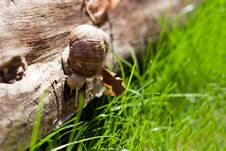 Free Snail On A Tree Royalty Free Stock Photo - 19538875