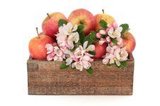 Free Apple Flower Blossom Beauty Stock Photos - 19539513