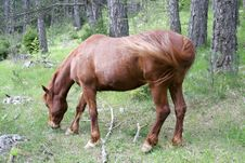 Free Brown Horse Stock Photos - 19541803