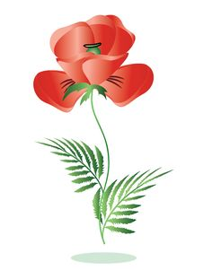Free Red Poppy Royalty Free Stock Image - 19541876