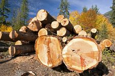 Free Cut Logs In Forest Stock Photos - 19544143
