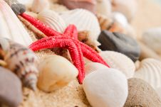 Free Pearl On The Seashell . Stock Images - 19545334