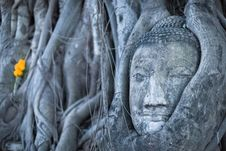 Free Buddha Heat Royalty Free Stock Photos - 19545348