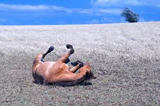 Free Horse Playing Stock Photography - 19545382