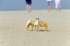 Free Ghost Crab On The Beach Royalty Free Stock Images - 19545589