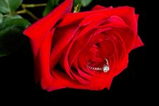 Free Diamond Rose Stock Photography - 19546122
