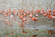 Free Flamingo Stock Photography - 19547342