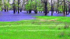 Free A Spring Landscape. The Flooded Trees Stock Image - 19547811