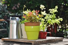 Free Pot, Watering Plants In A Garden Table Royalty Free Stock Photos - 19548358