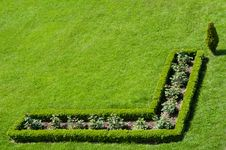 Free Buxus Hedge In The Grass Royalty Free Stock Images - 19548359