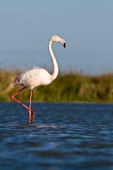 Free Pink Flamingo Stock Images - 19548544