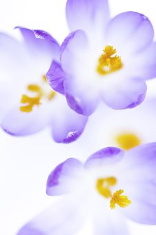Free Unique Flowers Stock Photos - 19549983