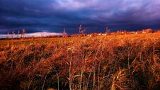Free Panorama In The Marshes Stock Images - 195453504