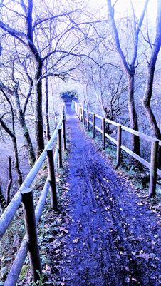 Free Panorama On A Path In The Marshes Royalty Free Stock Image - 195454186