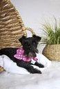 Free Dog Stock Photography - 19553432