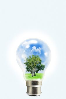 Bulb With Natural Inside Stock Photography