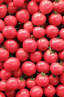 Free Fresh Tomatoes Stock Photos - 19551853